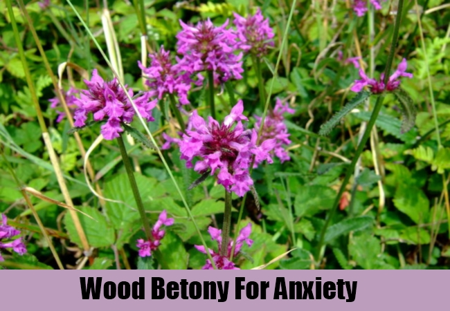 Wood Betony For Anxiety