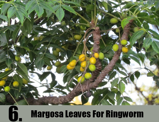 Margosa Leaves For Ringworm