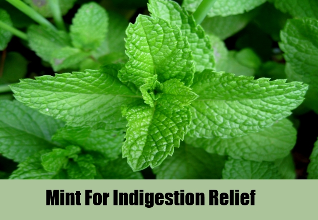 Mint For Indigestion Relief