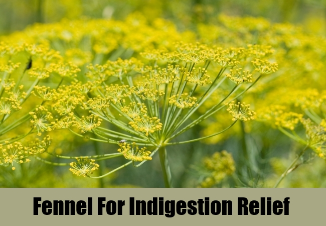 Fennel For Indigestion Relief