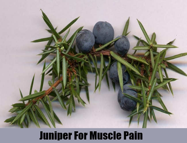 Juniper For Muscle Pain