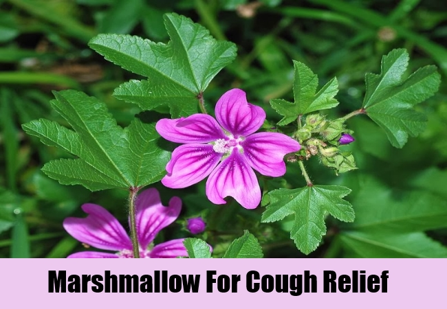 Marshmallow For Cough Relief