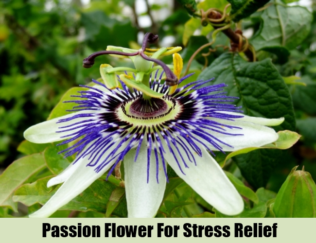Passion Flower For Stress Relief