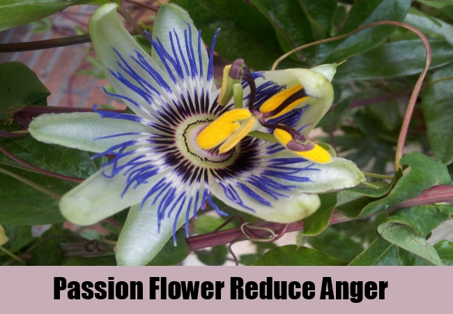 Passion Flower Reduce Anger