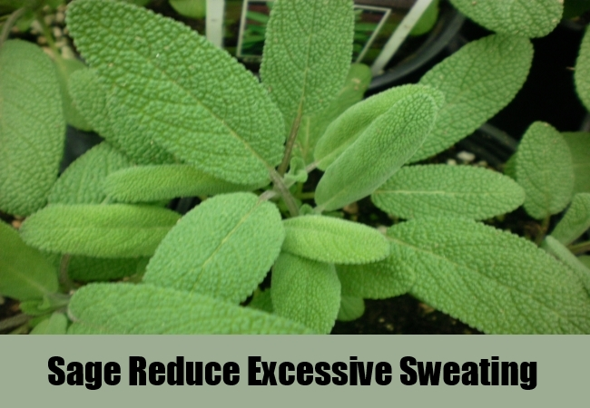 Sage Reduce Excessive Sweating