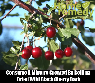 Wild Black Cherry Bark