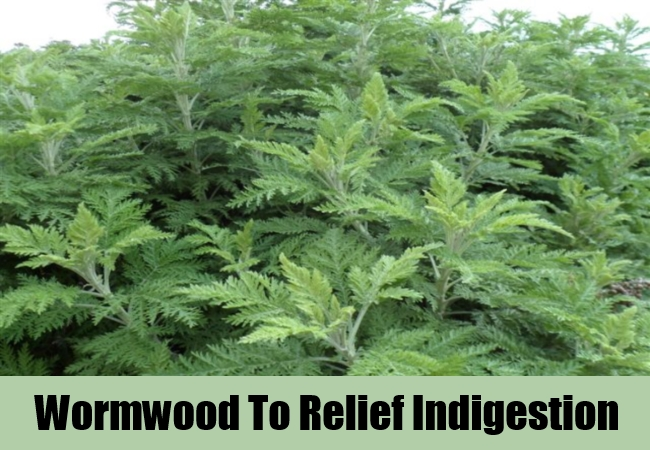 Wormwood To Relief Indigestion