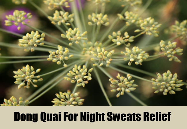 Dong Quai For Night Sweats Relief