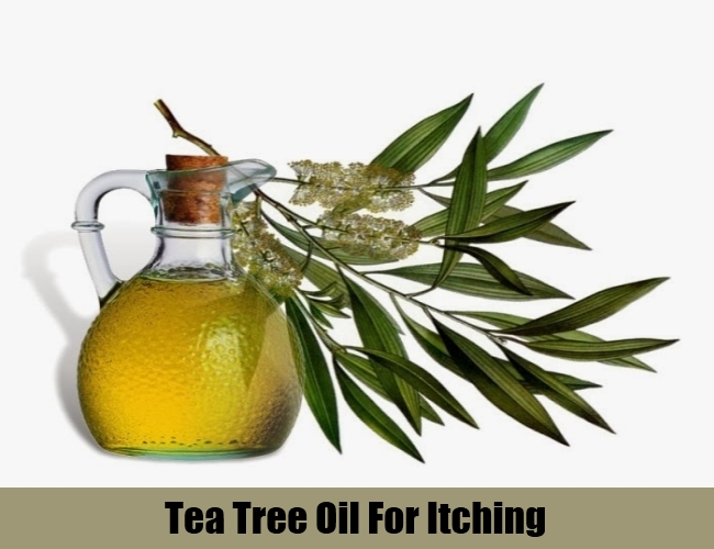 Tea Tree Oil For Itching