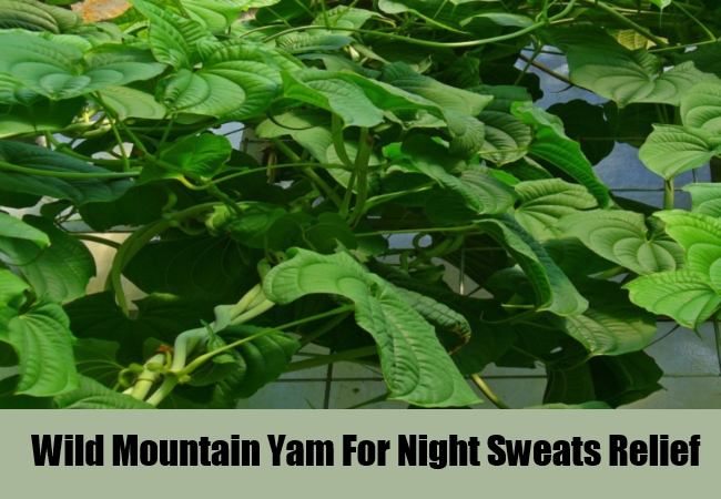 Wild Mountain Yam For Night Sweats Relief