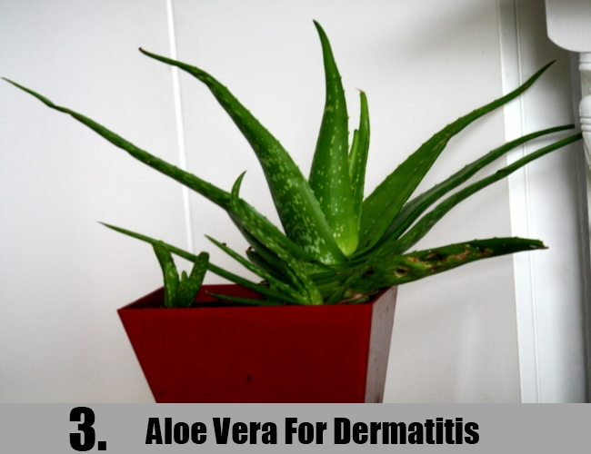 Aloe Vera For Dermatitis