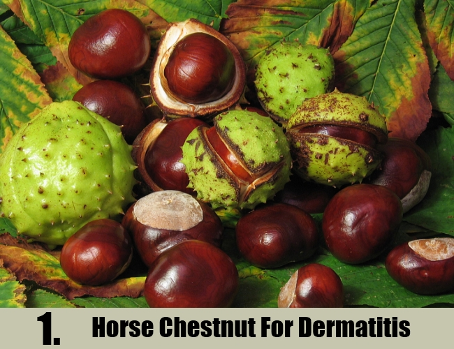 Horse Chestnut For Dermatitis