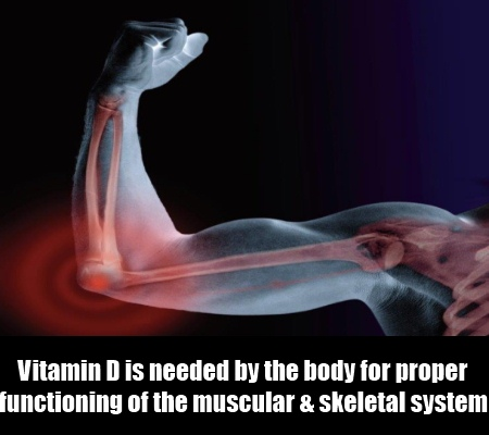Musculoskeletal Growth