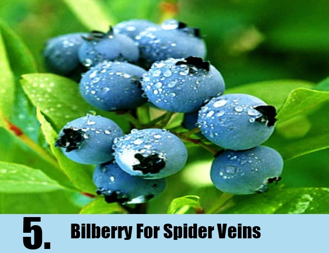 Bilberry For Spider Veins