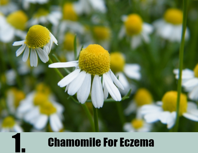 Chamomile For Eczema