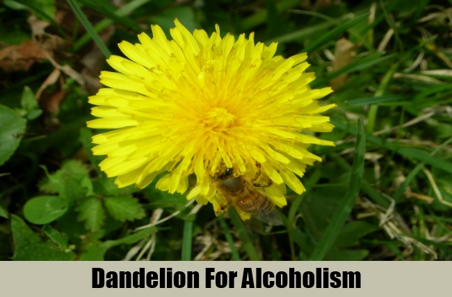 Dandelion For Alcoholism