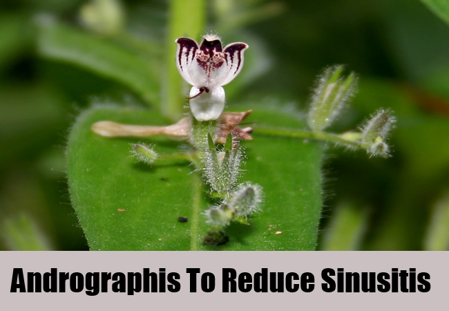 Andrographis To Reduce Sinusitis