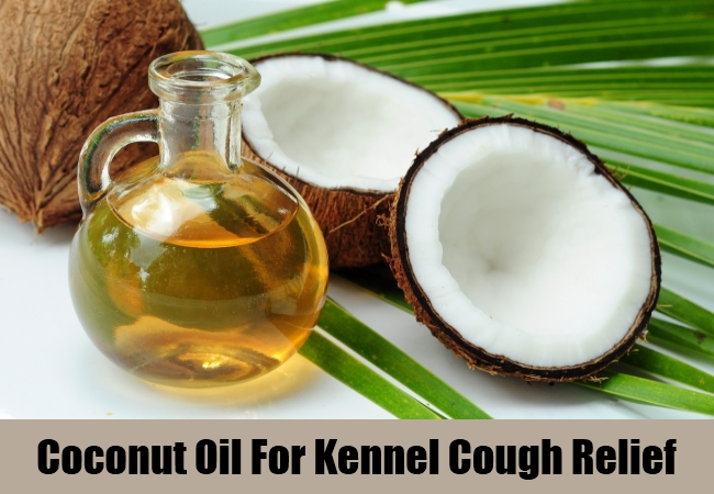 Coconut Oil For Kennel Cough Relief