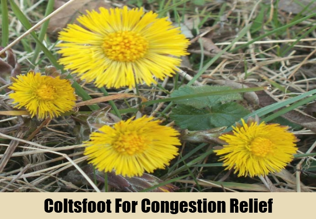 Coltsfoot For Congestion Relief