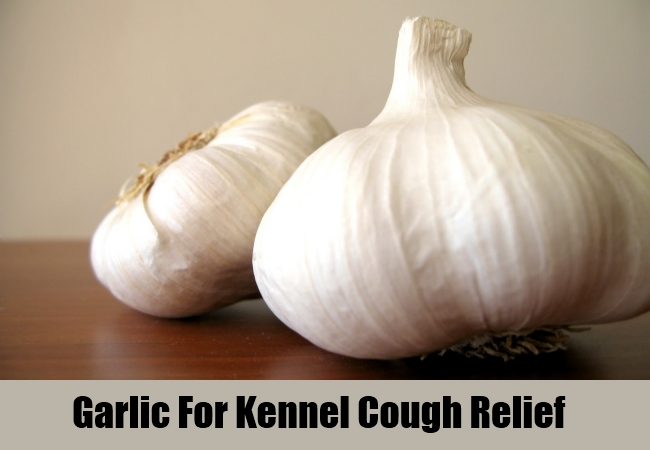 Garlic For Kennel Cough Relief