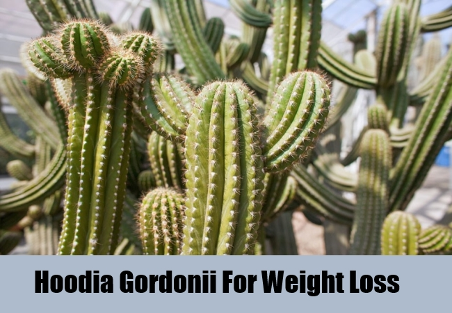 Hoodia Gordonii For Weight Loss