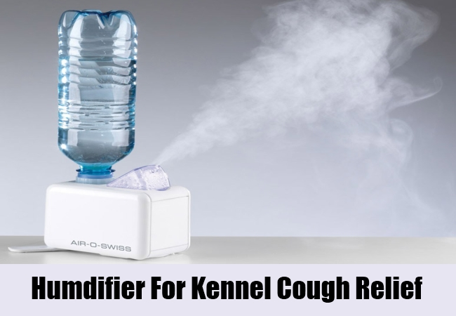 Humdifier For Kennel Cough Relief