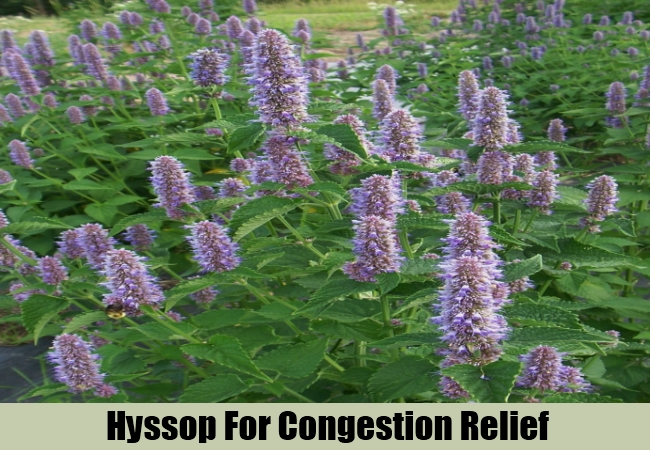 Hyssop For Congestion Relief