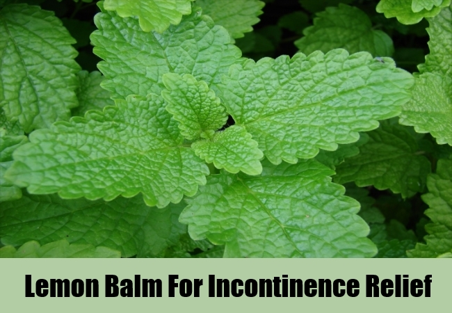Lemon Balm For Incontinence Relief
