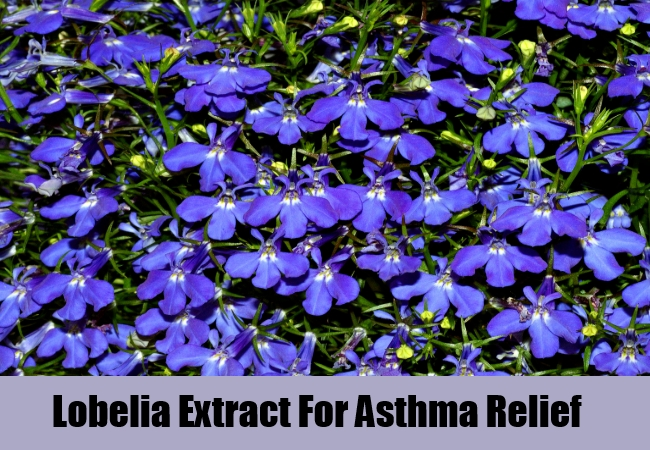 Lobelia Extract For Asthma Relief