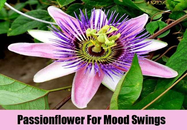 Passionflower For Mood Swings