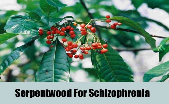 Serpentwood For Schizophrenia