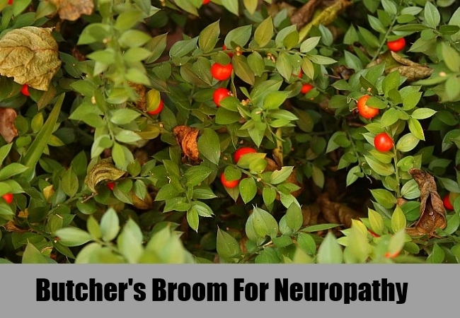 Butcher's Broom For Neuropathy