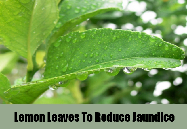 Lemon Leaves To Reduce Jaundice