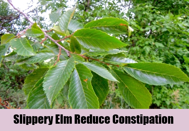 Slippery Elm Reduce Constipationj