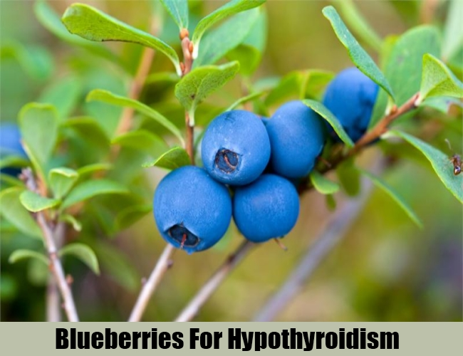 Blueberries For Hypothyroidism