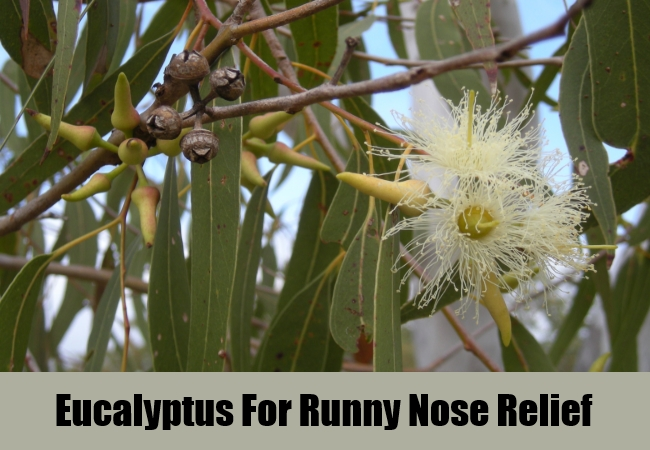 Eucalyptus For Runny Nose Relief