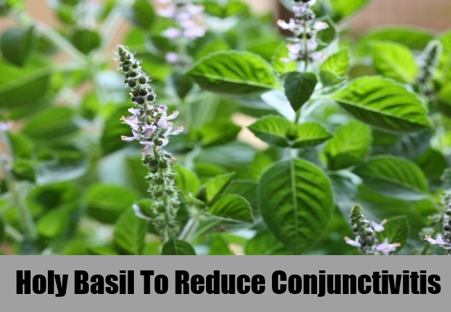 Holy Basil To Reduce Conjunctivitis