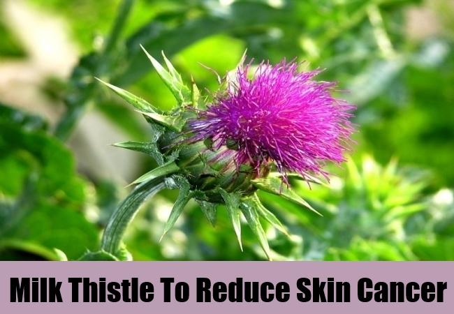 Milk Thistle To Reduce Skin Cancer