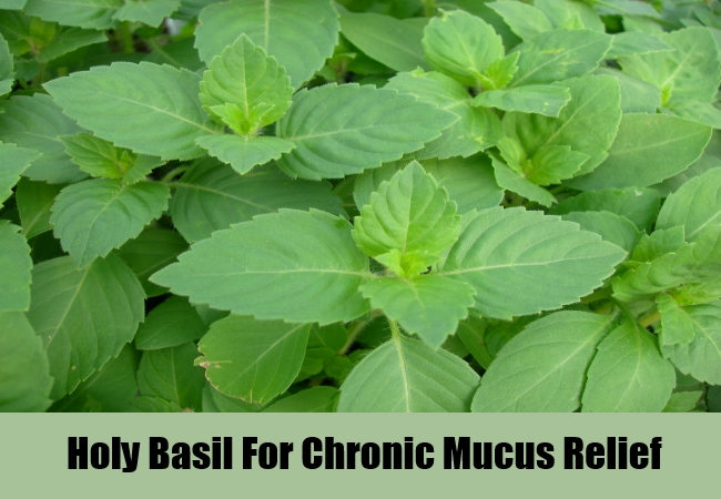 Holy Basil For Chronic Mucus Relief