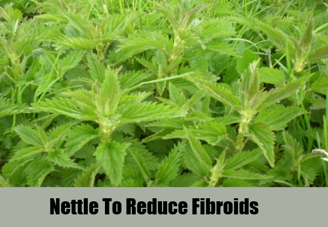 Nettle To Reduce Fibroids