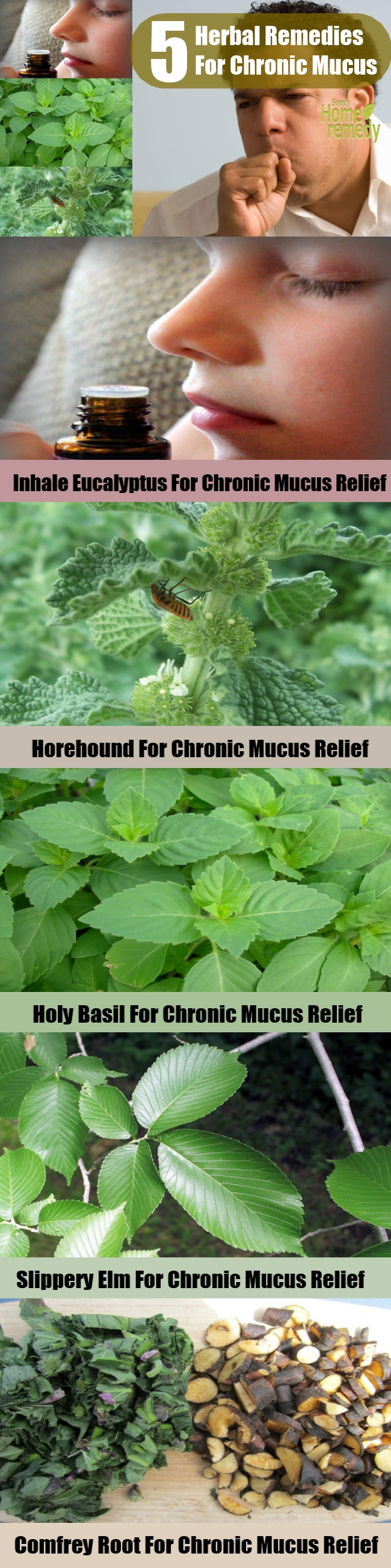 Top 5 Herbal Remedies For Chronic Mucus