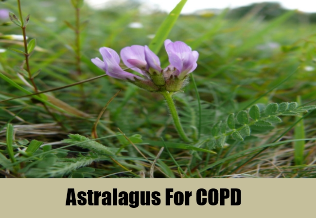 Astralagus For COPD