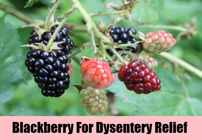 Blackberry For Dysentery Relief