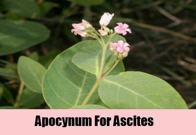 Apocynum For Ascites