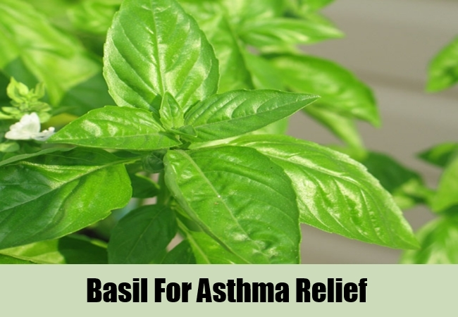 Basil For Asthma Relief