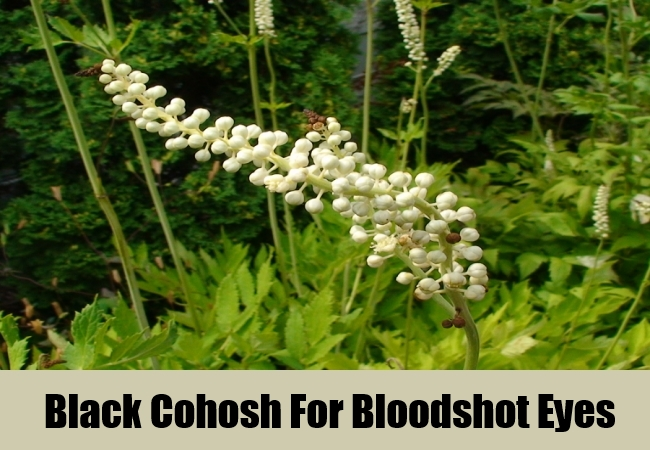 Black Cohosh For Bloodshot Eyes