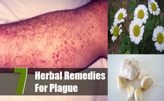 Herbal Remedies For Plague