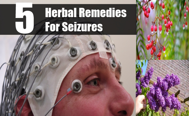 Herbal Remedies For Seizures