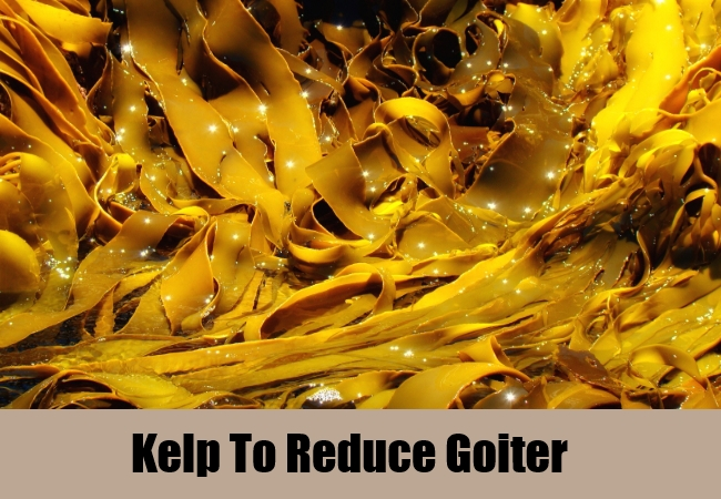 Kelp To Reduce Goiter