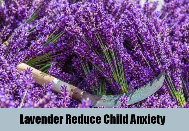 Lavender Reduce Child Anxiety